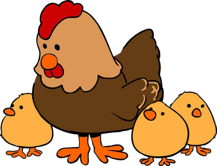 chicken-puns